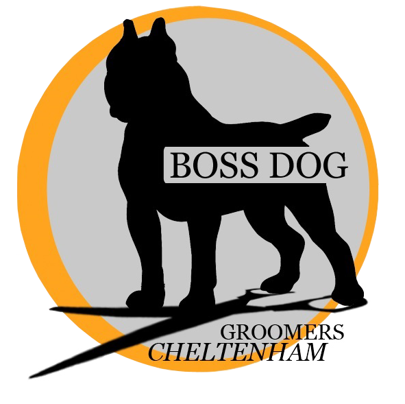 Boss Dog Grooming Cheltenham dog groomer